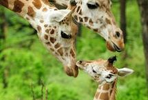 Parenting in Animal Kingdom / When Love is Bigger then Life