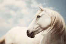 Horses!! / Who doesn't love em'? / by Lacey Terveer