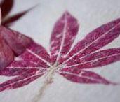 Gepreßte Blumen + Blätter / Pflanzen pressen