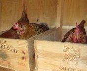 Hühnerhaus / Eine Wohnung für die Hühner