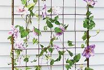 ~flowers for garden~