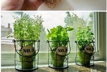 Herbs/Yrtit