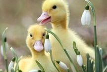 Wiosna (Primavera)