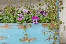 Country Planter / by Elizabeth Greer