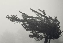 TREES | A LOVE AFFAIR / All things trees, gorgeous tree photos, unique designs with trees