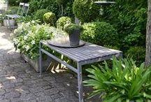 Petit jardin / Litle garden