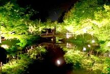 Japan Adventures / Places that you will enjoy in Japan