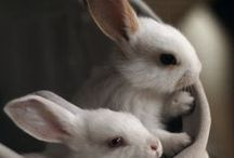 bunnies / by Mary Bedard