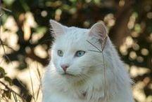 Chat Alors !!  / Il y a deux moyens d'oublier les tracas de la vie.... la musique et les chats (A. Schweitzer)