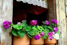 De la fenêtre / Ouverte ou fermée, de l'intérieur ou de l'extérieur,  qu'elle soit ancienne ou neuve.... en voyant la fenêtre on peut déjà imaginer la vie qui s'écoule à l'intérieur.