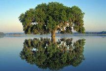 """Miroir - Mirror / """"La vie est comme un miroir. Si tu lui souris, elle te renvoie ton image."""" Louis Nucera"""