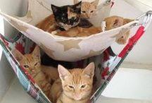 Felines wonderful