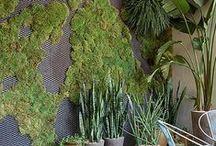 Interior green walls