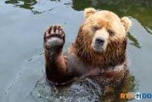 thema beren