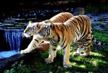 Big Cats / With some not so big cats.
