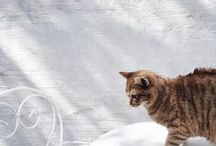 ph: cats