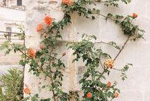 ph: garden