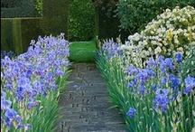 Flowers - Gardens- yard / by Cindy Nelson