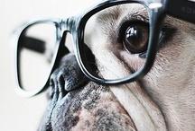 Pug ♥