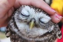 owls / by Maggie Cruz