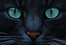 Mascotas / by Irving Hersan