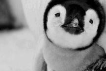 Penguino :) / by Maggie Cruz