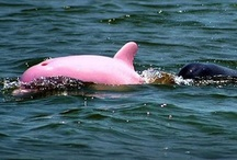 dolphins / by Maggie Cruz