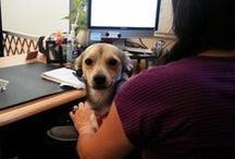 Dogs in the workplace: Ideas, suggestions and fun! / RedRover loves bringing furry friends to the office, and all the benefits that ensue!