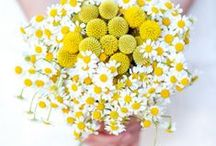 ▲Blossom/ Flowers / Green