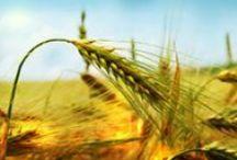 Antalya Kobi / Antalya Kobi olarak amacımız işletmelere doğru ve yerinde hizmet etmektir.