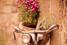 bike/magrela