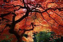 foto a příroda
