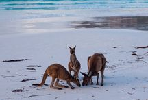 Australia / One of the greatest places to live on the planet !!!
