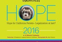 2016 LegalizeFerrets.org Calendar / These are the photos from the 2016 Legalize Ferrets Calendar available at http://legalizeferrets.org/support/2016-legalize-ferrets-calender.html