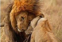 Afryka dzika