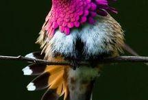 Les oiseaux !!