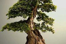 Notice me bonsai
