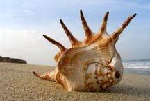 Muszle,ryby.... / i inne wodne stworzenia...podwodny świat
