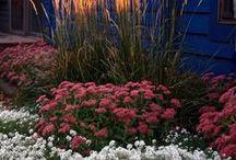 Kwiaty,ogrody...