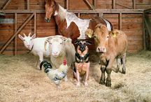 Barnyard Buddies  / Love all the little buddies that live in our barns. Buddies to us and to each other!! / by Sherry Roberts