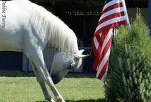 horses / by Karen Corr