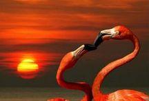 flamingoes / by Karen Corr