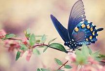 Motyle / Motyle