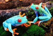 Żaby. żabki...