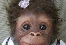 Małpy,małpki.małpeczki... / Małpy,małpki,małpeczki...