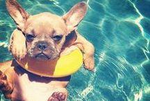 Zvířata milují vodu