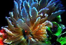 Undersea world / Подводный мир