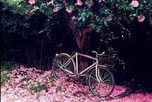 Garden heaven / Glorious English gardens !  / by sarah gilson