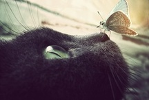 Cute/Animaux