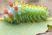 creepy crawlies & flutterbys / by la la land